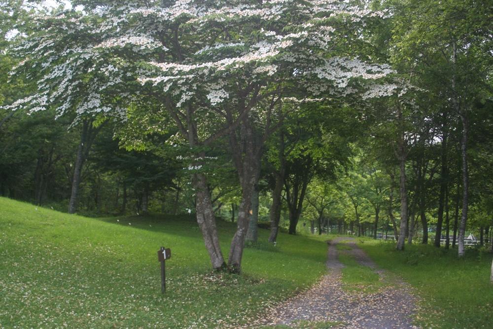 ホテルから自然に森へ