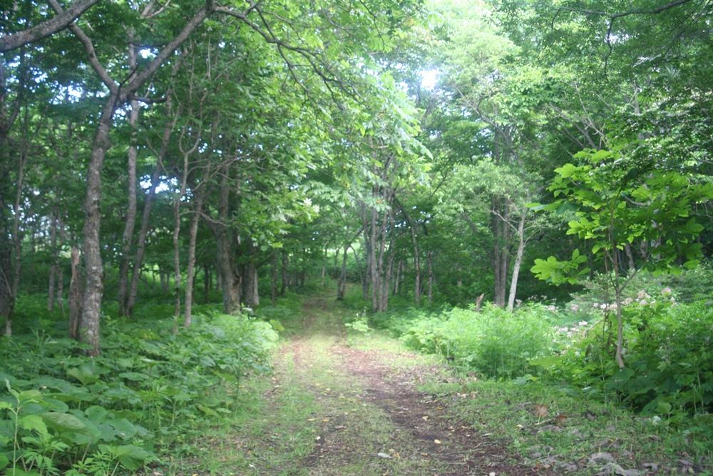 自然林の中