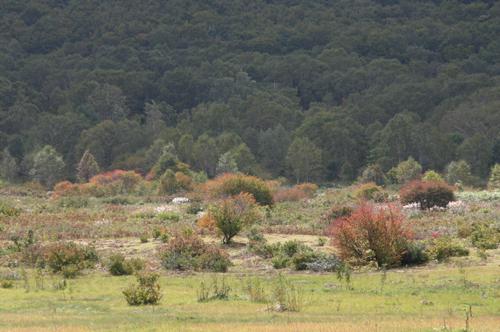 中牧の紅葉IMG_8027