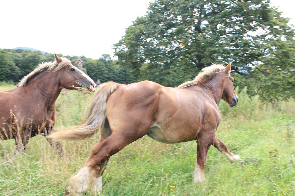 追いかける馬
