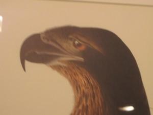 Depressed eagle