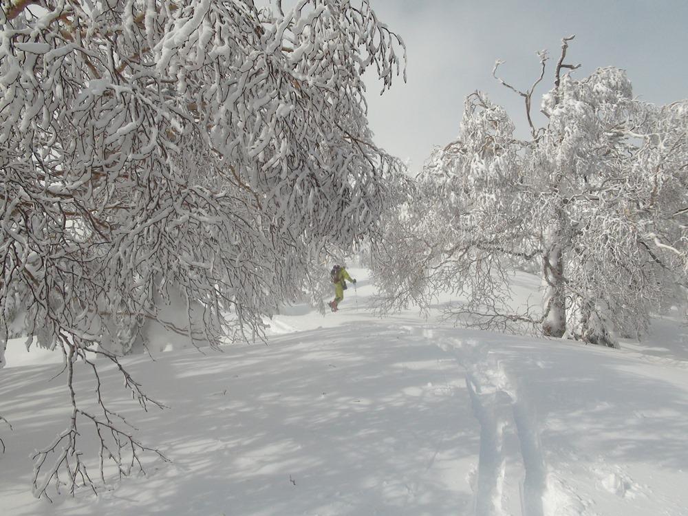 Ⅰスキーで森へ行こう