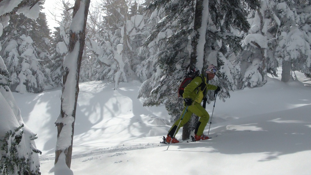 森へスキーアオモリトドマツ0