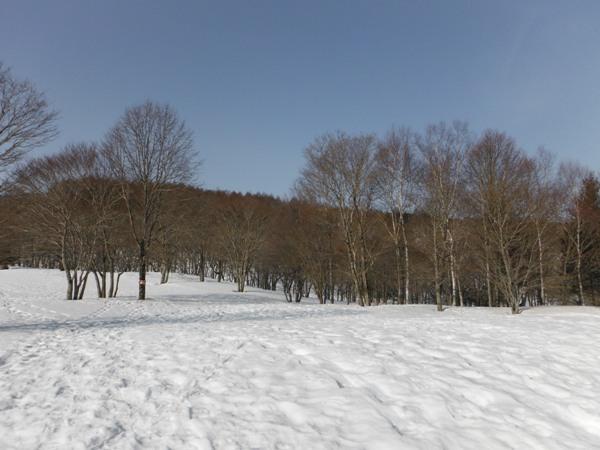 晴れの森22