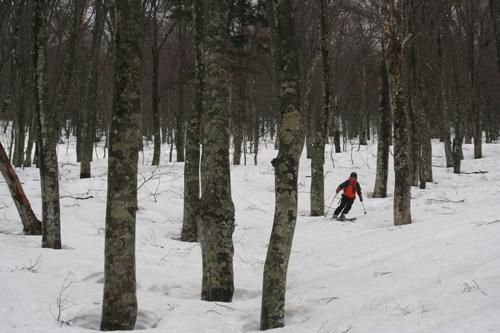 11ブナ155年森滑りIMG_7787