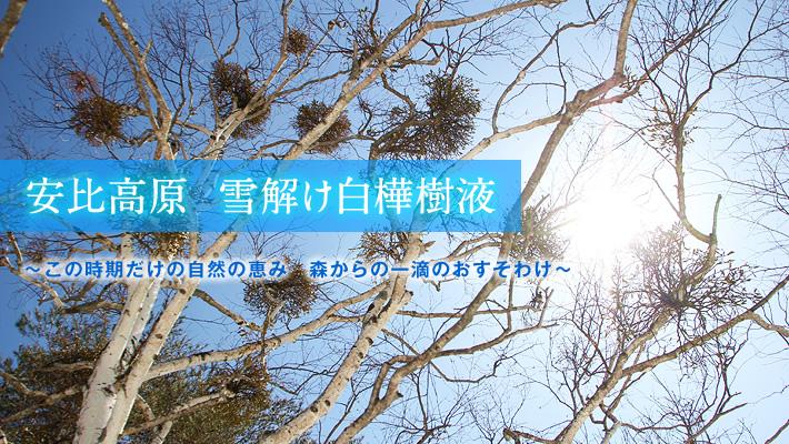 安比高原 雪解け白樺樹液/〜この時期だけの自然の恵み 森からの一滴のおすそわけ〜