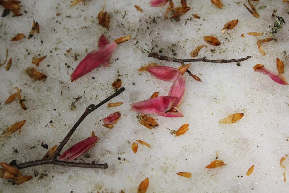 赤雪・春吹雪