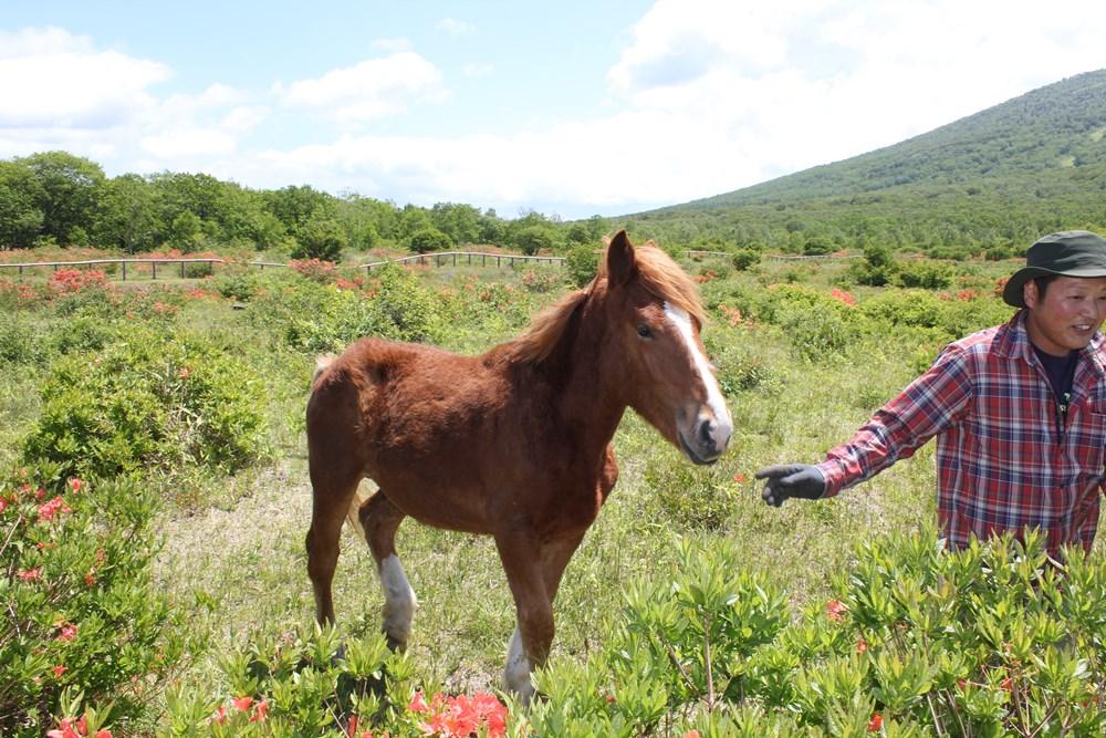 放牧時の馬