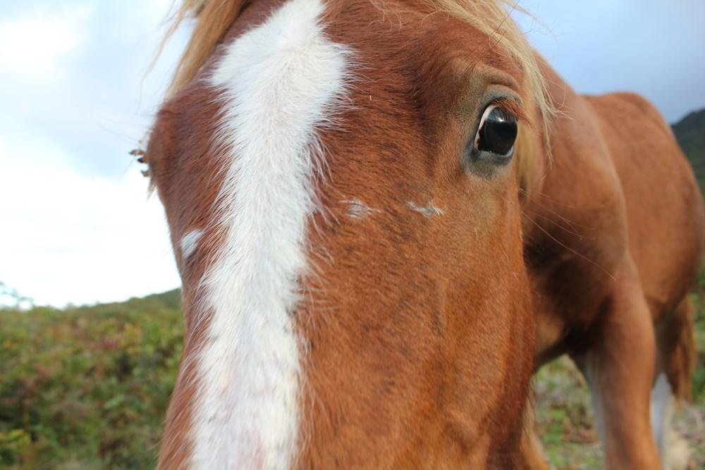 かわいい馬ちゃんたち