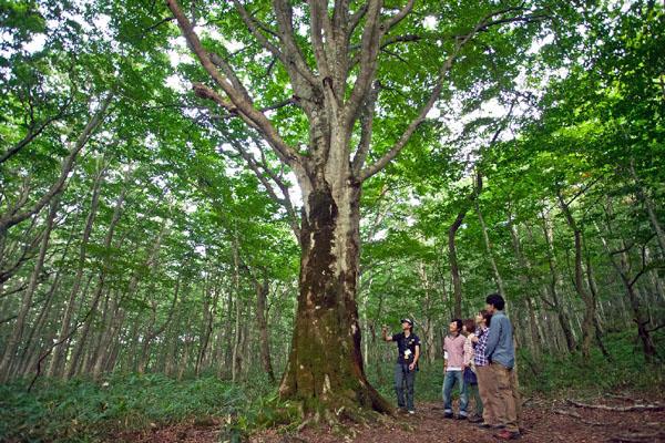 巨木の森マザー