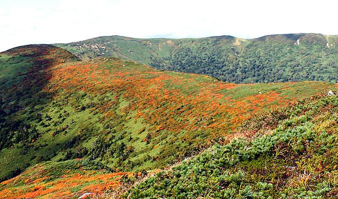 小畚山と三ツ石山間の稜線