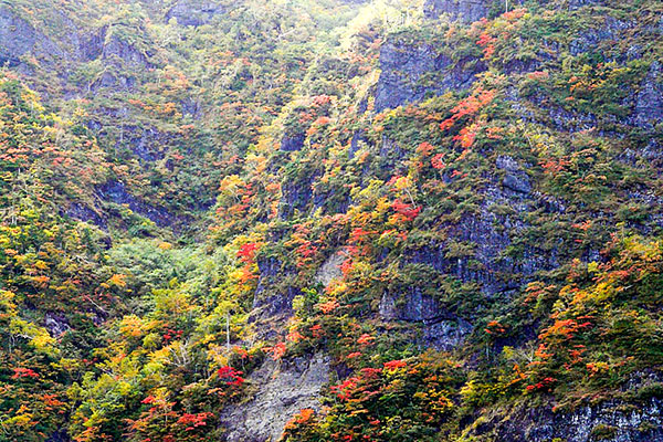 鬼ヶ城の断崖に鮮やかな紅葉