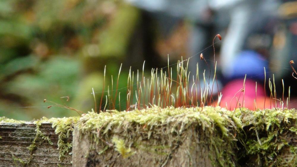 成長中の苔