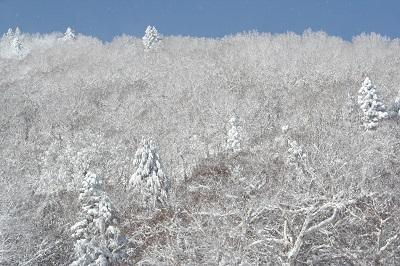 霧氷IMG_9944