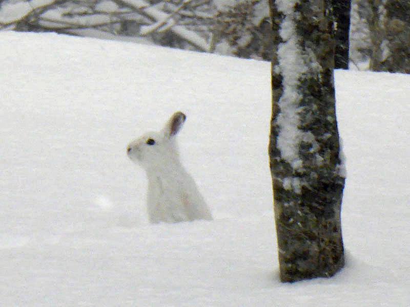 005ウサギ