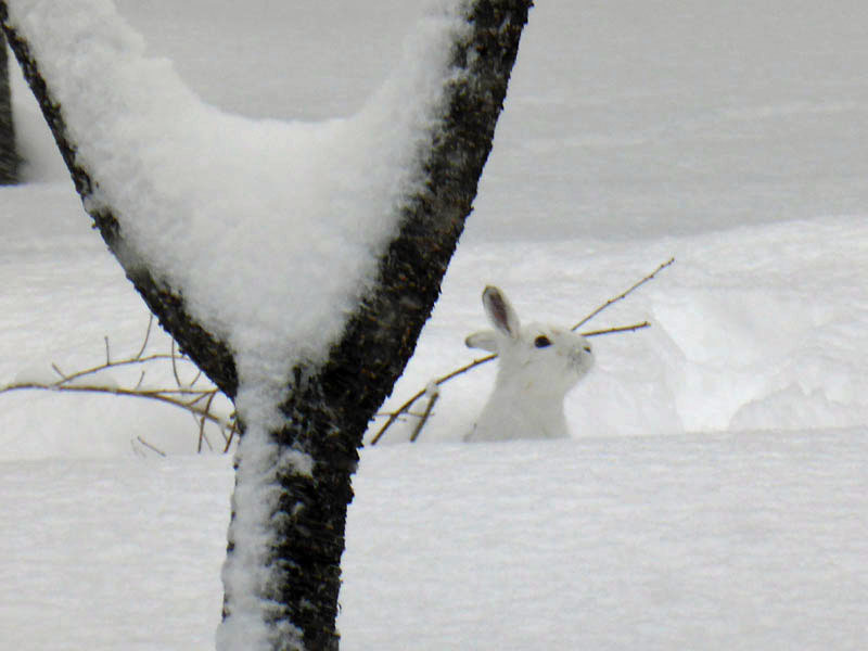006ウサギ