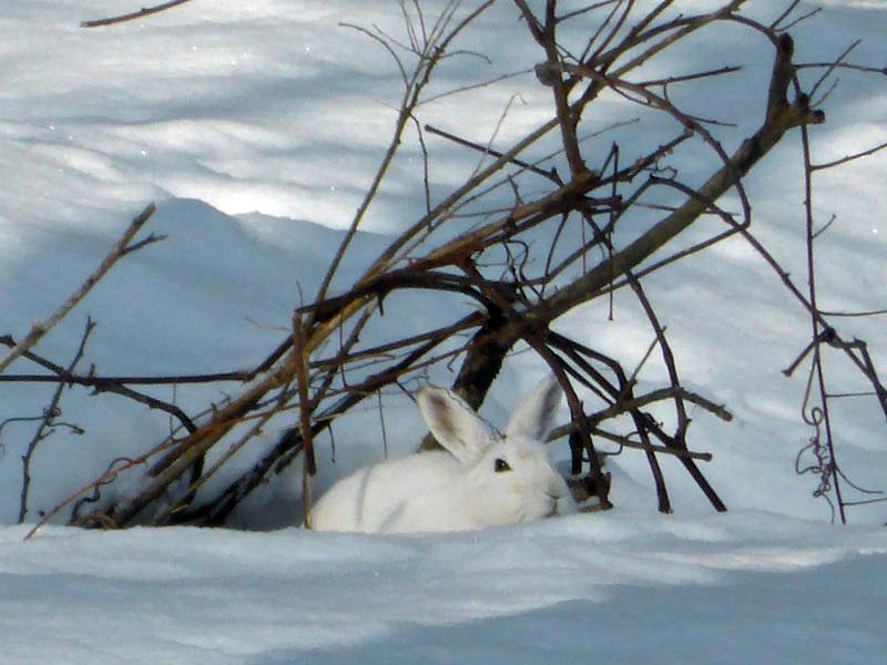 007ウサギ