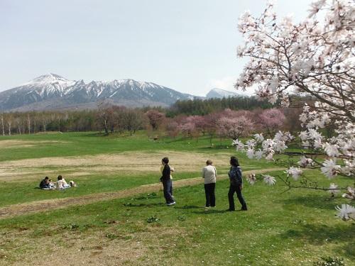 桜DSCF6590