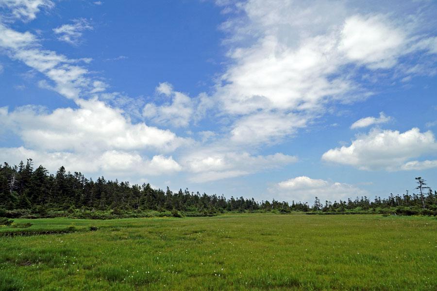 1八幡平黒谷地湿原