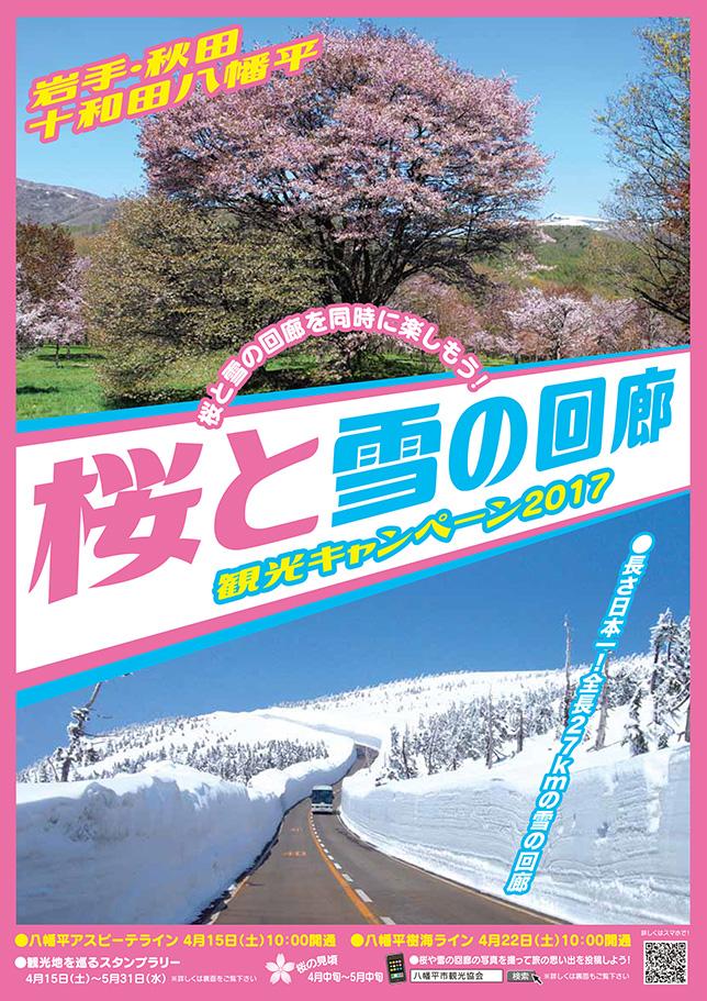 sakurayukinokairou644